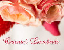 Oriental Lovebirds 東方愛鳥